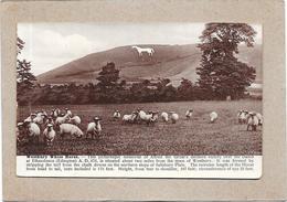 ANGLETERRE - WESTBURY WHITE HORSE - NANT** - - Angleterre