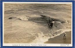 CPA Argentine Baleine échouée Ballena Territoire De Santa Cruz écrite Carte Photo - Argentina