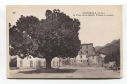 Castellar (06) - La Place De La Mairie, L'Orme Centenaire - CPA - France