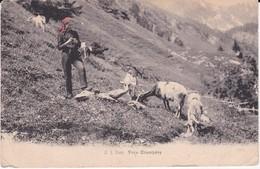 Suisse Près Champéry - Schweiz