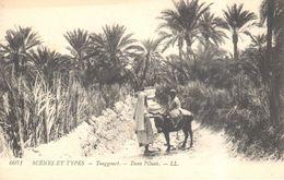 Afrique - Maroc - Scènes Et Types - Touggourt - Dans L'Oasis - Maroc