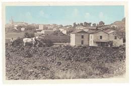 Cpa Murviel Les Béziers - Vue Générale ( Cheval De Trait ) - France