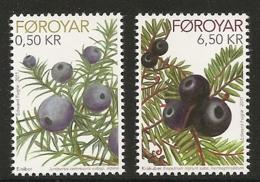 Féroé 2011 -  Flore : Genièvre Et Camarine Noire - Isole Faroer