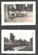 Antwerpen - Rivierenhof - 2 X Originele Foto Uit 1956 - 6,8 X 9,9 Cm - Paarden / Horses - Antwerpen