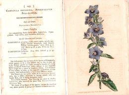 CURTIS'S BOTANICAL MAGAZINE, CAMPANULA PEREGRINA, TAVOLA 1257, VOLUME 31, 1810 Original Hand-Colored Lithograph - 1800-1849