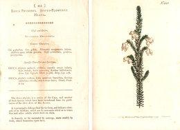 CURTIS'S BOTANICAL MAGAZINE, ERICA PHYSODES, TAVOLA 443, VOLUME 13, 1799 Original Hand-Colored Lithograph - Livres Anciens
