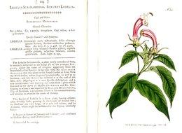 CURTIS'S BOTANICAL MAGAZINE, LOBELIA SURINAMENSIS, TAVOLA 225, VOLUME 7, 1793 Original Hand-Colored Lithograph - Livres Anciens