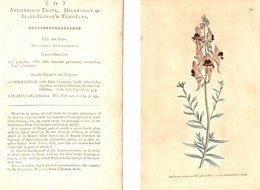 CURTIS'S BOTANICAL MAGAZINE, ANTIRRHINUM TRISTE, TAVOLA 74, VOLUME 3, 1789 Original Hand-Colored Lithograph - Livres Anciens