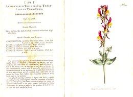 CURTIS'S BOTANICAL MAGAZINE, ANTIRRHINUM TRIPHYLLUM, TAVOLA 324, VOLUME 9, 1796 Original Hand-Colored Lithograph - Old Books