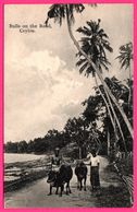 Ceylon - Bulls On The Road - Bullock - Palmiers - Palms - Animée - PLATE Ltd N° 76 - Sri Lanka (Ceylon)