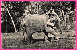 Ceylon - Elephant At Work - Eléphant Au Travail - Pachyderme - Animée - PLATE Ltd N° 124 - Sri Lanka (Ceylon)