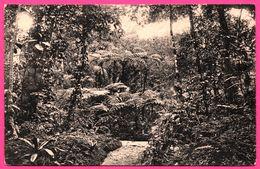 Colombo - Group Of Tree Ferns At Hakgalla Gardens - Nuwara Eliya - PLATE Ltd N° 150 - Sri Lanka (Ceylon)