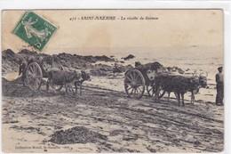 Loire-Atlantique - La Récolte Du Goëmon - Saint Nazaire