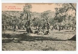 22236  CPA   SOLLER  : Un Campo De Ollivos  ! ( Tâchée En Haut ) - Espagne