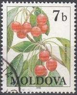 Moldova 1998 Michel 278 O Cote (2008) 0.20 Euro Le Merisier Cachet Rond - Moldavie