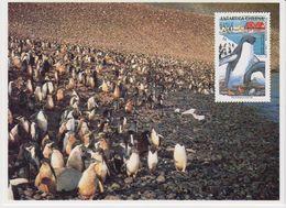 Chile 1993 Antarctica / Penguins  Postcard (with Reprint Of The Stamp) Unused (40108) - Zonder Classificatie