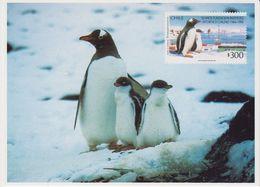 Chile 1994 Antarctica / Penguins   Postcard (with Reprint Of The Stamp) Unused (40109) - Zonder Classificatie
