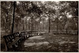 Grande Photo Originale La Vie Du Banc De Bois Circulaire En Forêt Et Son Gosse En 1941 - Objects