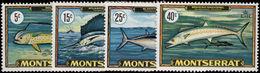 Montserrat 1969 Game Fish Unmounted Mint. - Montserrat