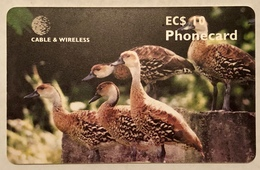 Tree Ducks - Antigua And Barbuda