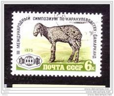 Rusie, Russia, Mouton, Lamb, Sheap - Ferme