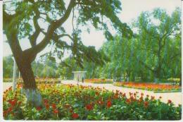 Shenyang Peiling Park Uncirculated Postcard (ask For Verso/demander Le Verso) - China