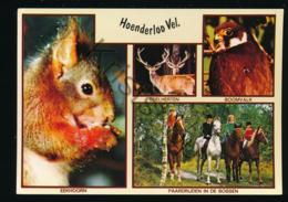 Hoenderloo  [KSACY 0.205 - Niederlande