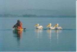 Ethiopia Lac Tana Pelicans Uncirculated Postcard (ask For Verso / Demander Le Verso) - Äthiopien