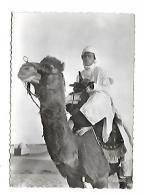JEUNE CHAMELIER ET SON MEHARI SERIE COLLECTION SAHARIENNE - Algérie
