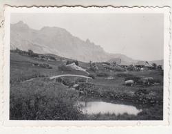 Jardin Alpin - Lautaret - Photo Format 6 X 8.5 Cm - Places