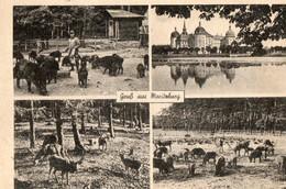 ALLEMAGNE. CPA. Gruss Aus Maritzburg. Jagdschlob. Wildpark. Animaux. - Moritzburg