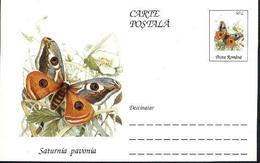 Papillon - SATURNIA PAVONIA   Entier Postal ( Carte Postale). RARE  Roumanie / Romania 1995 - Papillons
