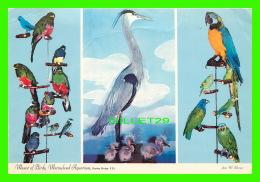 OISEAUX - BIRDS - MANOR OF BIRDS, MARINELAND AQUARIUM, STALEY BRIDGE, P.E.I. - PERROQUETS - - Oiseaux