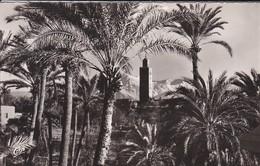 MAROC----MARRAKECH--la Palmeraie La Koutoubia Et L'atlas---voir 2 Scans - Marrakech