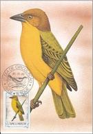 "728 S. Tomè E Principe 1983 Birds FDC Xanthophilus Princeps "" Martin Pescatore ""  Passeri Maximum Card Maxi - Sparrows"