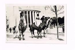 Les Chameaux.Exposition 1935. - Algeria