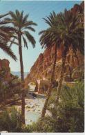El Kantara Uncirculated Postcard (ask For Verso / Demander Le Verso) - Algeria