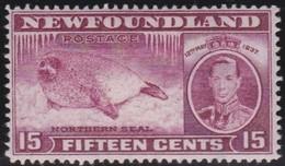 Newfoundlans    .    SG   .      263c      .     *       .     Ongebruikt    .    /      .     Mint-hinged - Newfoundland