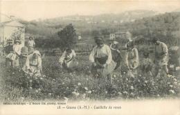 GRASSE CUEILLETTE DE ROSES - Grasse