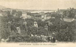 CUEILLETTE DES FLEURS D'ORANGERS EDITION P.L. MAILLAN - Francia