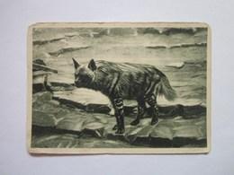 Zoological Series Hyena - Animals