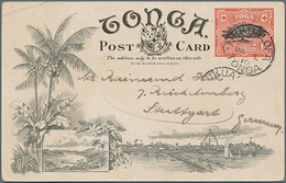 "Beleg 1910, 1 P. Brotfruchtbaum Bildpost-GA-Karte Bild ""Tufumahina"", Bedarfskarte Von Tonga Nach Stuttgart Gelaufen - Ohne Zuordnung"