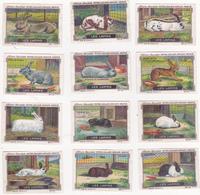 Lot Complet Et Indivisible De 12 Chromos Publicitaires 4 X 6 Animaux Les Lapins Rabbit - Nestlé