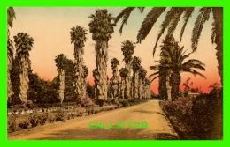 FLOWER, TREES - WASHINGTONIA PALMS - PUB BY SUNNY SCENES INC - - Autres