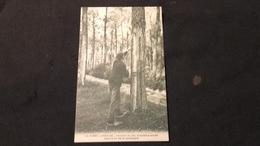 CPA 40 Forêt Landaise - Incision Du Pin Troisième Année Vers La Fin De La Campagne - France