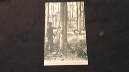 CPA 40 Forêt Landaise - Incision Du Pin Troisième Année - France