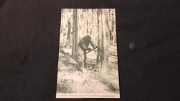 CPA 40 Forêt Landaise - Pose Du Zinc Première Année - France