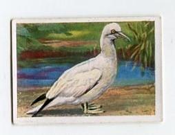 SB02162 Die Welt In Bildern Album 3 Schwimm- Und Tauchkünstler In Der Vogelwelt 85-1 Basstölpel - Cigarette Cards