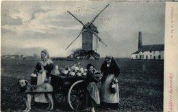 C1910 Molen En Fabriek In Zelzate Hondenkar ( Attelage De Chien, Dogcart ) LAITIERES Flamandes E. G. Nr 24  MELK Milch - Zelzate