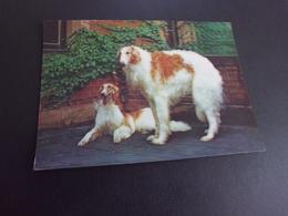 BELLE CARTE HOLOGRAPHIQUE...EN RELIEF..3D ...BEAUX CHIENS - Dogs